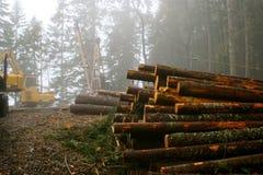 Floresta de abertura Fotografia de Stock