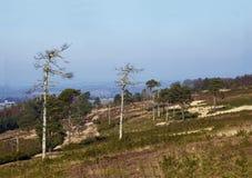 Floresta de Ashdown Imagens de Stock