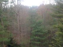 Floresta de Asheville Fotos de Stock Royalty Free