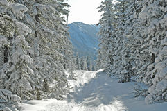 Floresta de Baikal Imagens de Stock Royalty Free