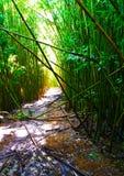 A floresta de bambu Fotografia de Stock