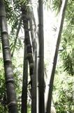 Floresta de bambu Fotos de Stock Royalty Free
