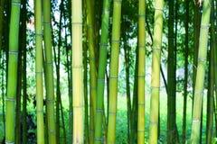 Floresta de bambu Imagem de Stock Royalty Free