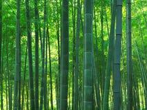 Floresta de bambu Foto de Stock Royalty Free