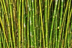 Floresta de bambu Fotos de Stock