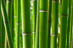 Floresta de bambu Fotos de Stock