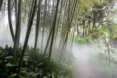 Floresta de bambu Fotografia de Stock