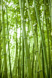 Floresta de bambu Foto de Stock Royalty Free
