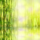 Floresta de bambu com reflexão no fundo dos termas da água Ilustração da aquarela com espaço para o texto ilustração do vetor