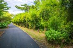 A floresta de bambu em ambos lado para andar completamente fotos de stock