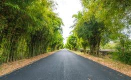 A floresta de bambu em ambos lado para andar completamente imagem de stock