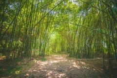 Floresta de bambu em ambos lado para andar completamente fotografia de stock royalty free