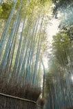 Floresta de bambu em Arashiyama, Japão foto de stock