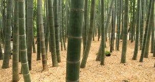 Floresta de bambu em Hokokuji em Kamakura Kanagawa handheld video estoque