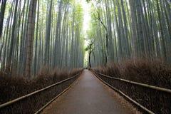 Floresta de bambu em Kyoto, Japão Imagem de Stock