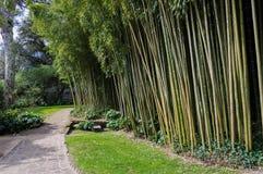Floresta de bambu em Ninfa Itália Fotos de Stock