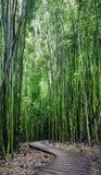 Floresta de bambu, fuga de Pipiwai, parque estadual de Kipahulu, Maui, Havaí Imagem de Stock