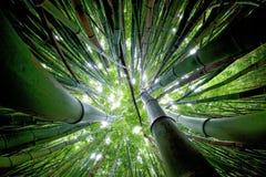 Floresta de bambu maui Imagem de Stock Royalty Free