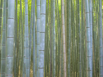Floresta de bambu na área de Kyoto Arashiyama Fotos de Stock