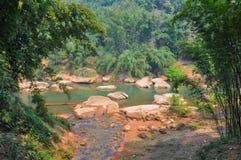 Floresta de bambu perto do brookside Imagens de Stock Royalty Free