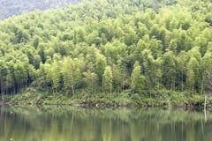 Floresta de bambu perto do lago Imagem de Stock Royalty Free