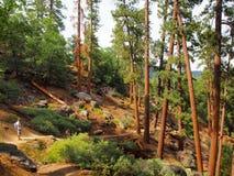 Floresta de Big Bear Imagem de Stock