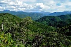 Floresta de Brasil Imagem de Stock