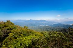 Floresta de Cameron Highlands Mossy que trekking imagens de stock royalty free