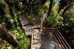 Floresta de Cameron Highlands Mossy que trekking imagem de stock
