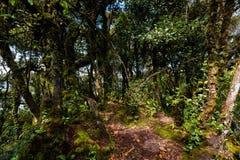 Floresta de Cameron Highlands Mossy que trekking foto de stock royalty free
