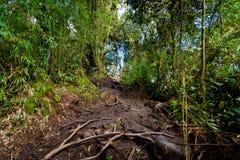 Floresta de Cameron Highlands Mossy que trekking fotografia de stock