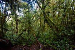 Floresta de Cameron Highlands Mossy que trekking imagem de stock royalty free