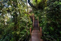 Floresta de Cameron Highlands Mossy que trekking fotografia de stock royalty free