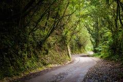 Floresta de Cameron Highlands Mossy que trekking fotos de stock