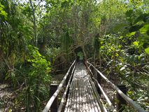 Floresta de Camiguin Fotografia de Stock Royalty Free