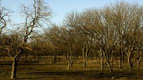 Floresta de Castaneda Imagens de Stock