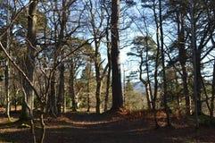 Floresta de Crathes, Abderdeenshire, Escócia Imagens de Stock