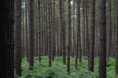 Floresta de Delamere imagem de stock