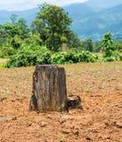 A floresta de Destroy pelo ser humano Foto de Stock