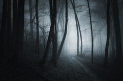Floresta de Dia das Bruxas da noite Fotografia de Stock
