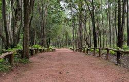 Floresta de Dipterocarp, Tailândia fotografia de stock royalty free