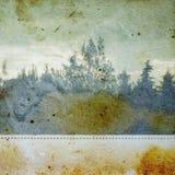 Floresta de Discolorated Foto de Stock