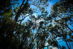 Floresta de Edelweis fotos de stock royalty free