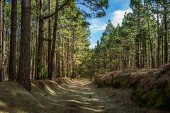 Floresta de Esperanza do La, ilha de Tenerife imagem de stock