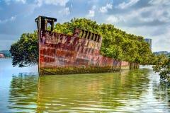 Floresta de flutuação dos manguezais: Naufrágio SS Ayrfield Imagem de Stock
