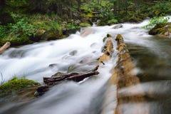 Floresta de fluxo Imagem de Stock Royalty Free