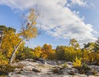 Floresta de Fontainebleau foto de stock