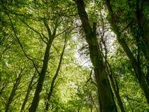 Floresta de Friston Fotos de Stock Royalty Free