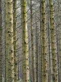 Floresta de Hafren, Llanidloes Fotografia de Stock Royalty Free