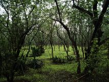 Floresta de Indian Hills na chuva imagem de stock
